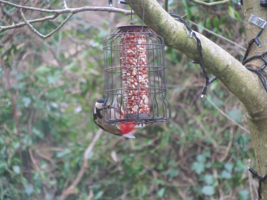 Woodpecker photo taken from living room chair