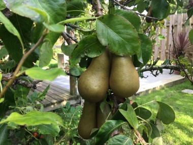 Fruits 2019